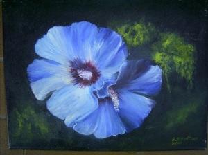 blaue Malvenblüte 129 Euro