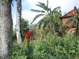 Garten mit Blume